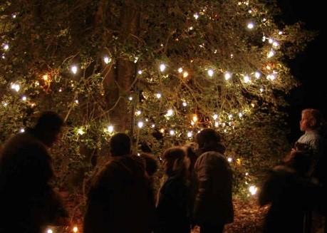 tree of lights image